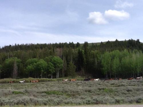 horses in Idaho